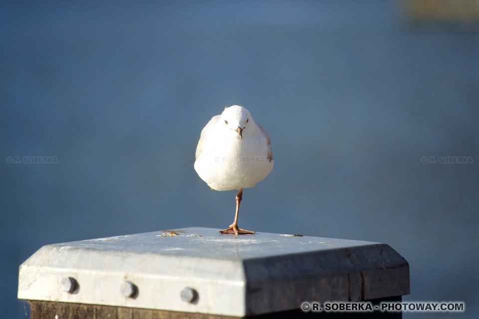 Photo d'un oiseau en équilibre sur une patte