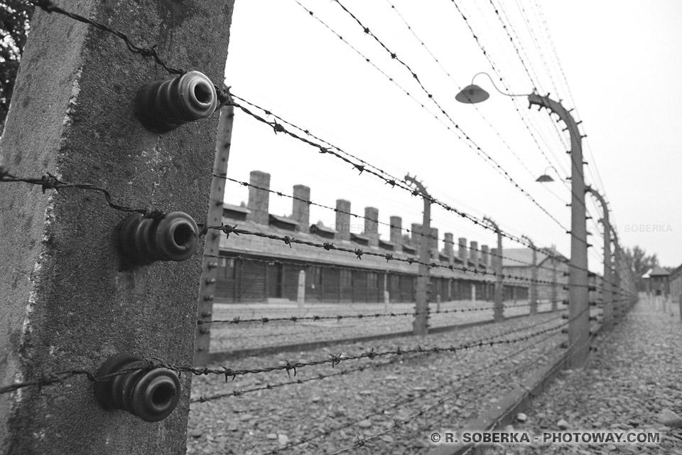 barbelés fils de fer barbelés à Auschwitz
