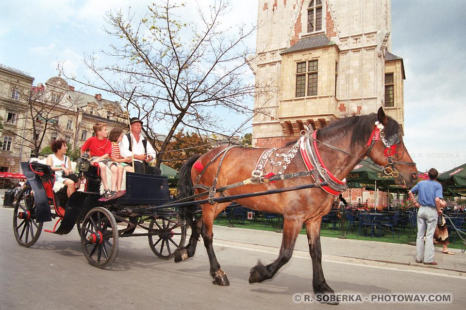 image Photo d'une calèche photos de toursites en vacances à Cracovie Pologne