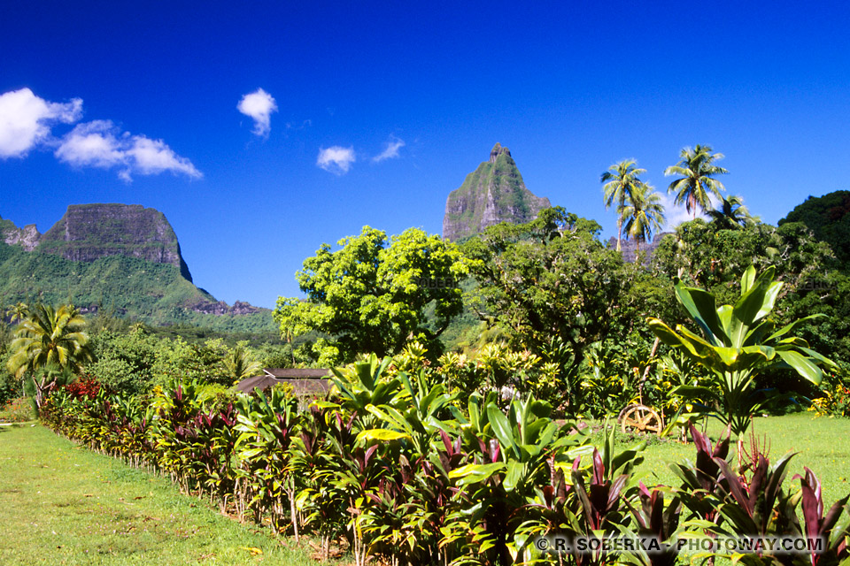 Photos de la végétation exotique de l'ile tropicale de Moorea