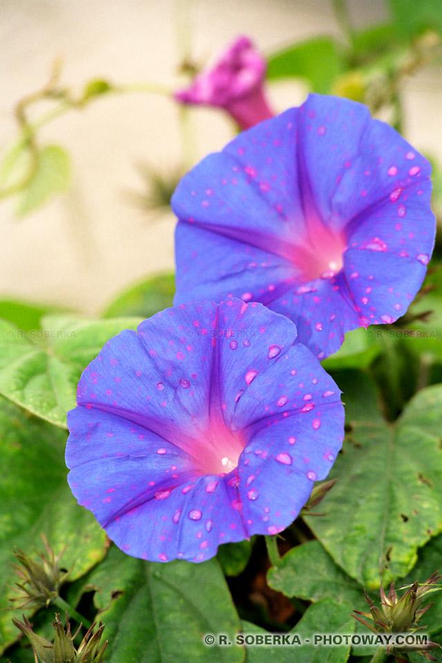 Photos de fleurs du printemps photo de fleurs portugaises images