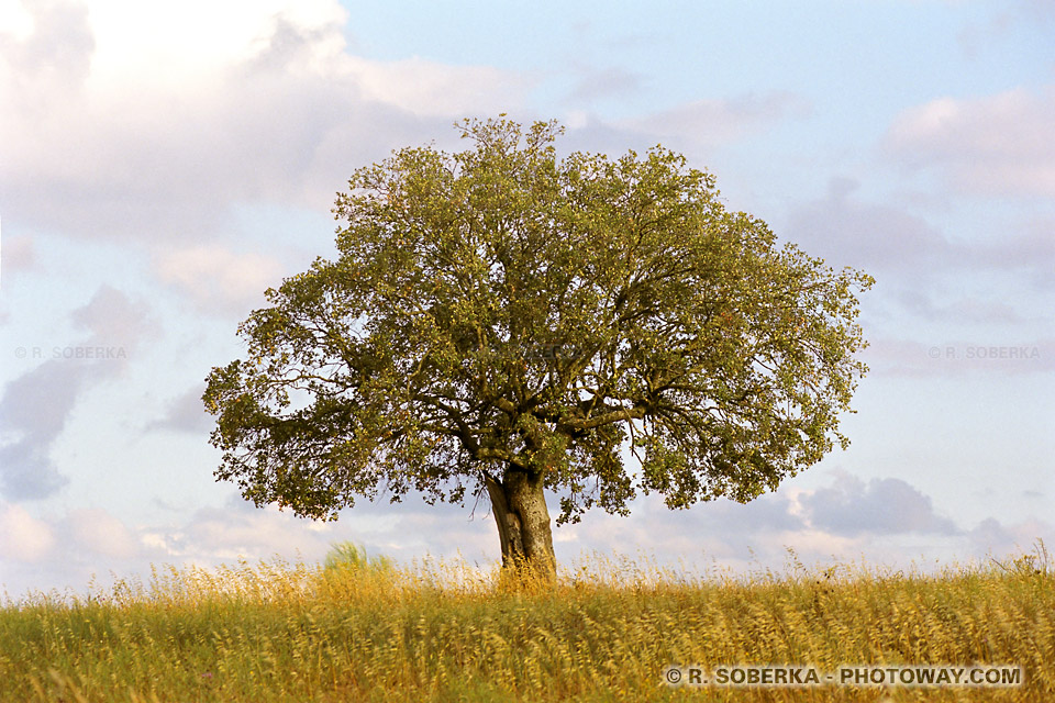 Fond d'écran arbre au Portugal téléchargement gratuit wallpaper photo