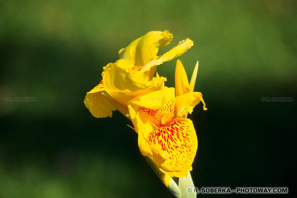Photos de fleurs tropicales, photo d'une fleur tropicale