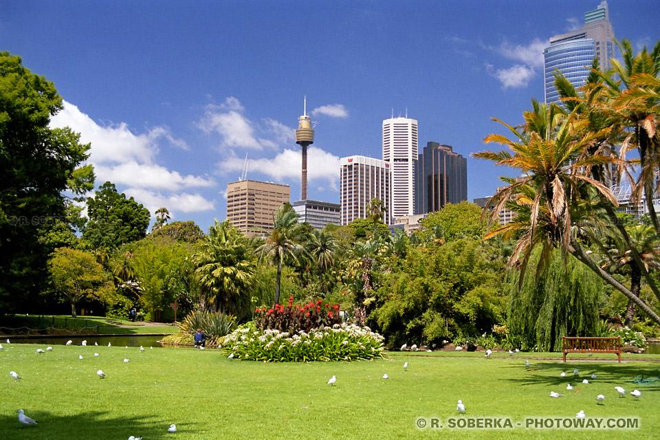 Fond d'écran jardins botaniques fonds d'écran Sydney wallpaper Australie