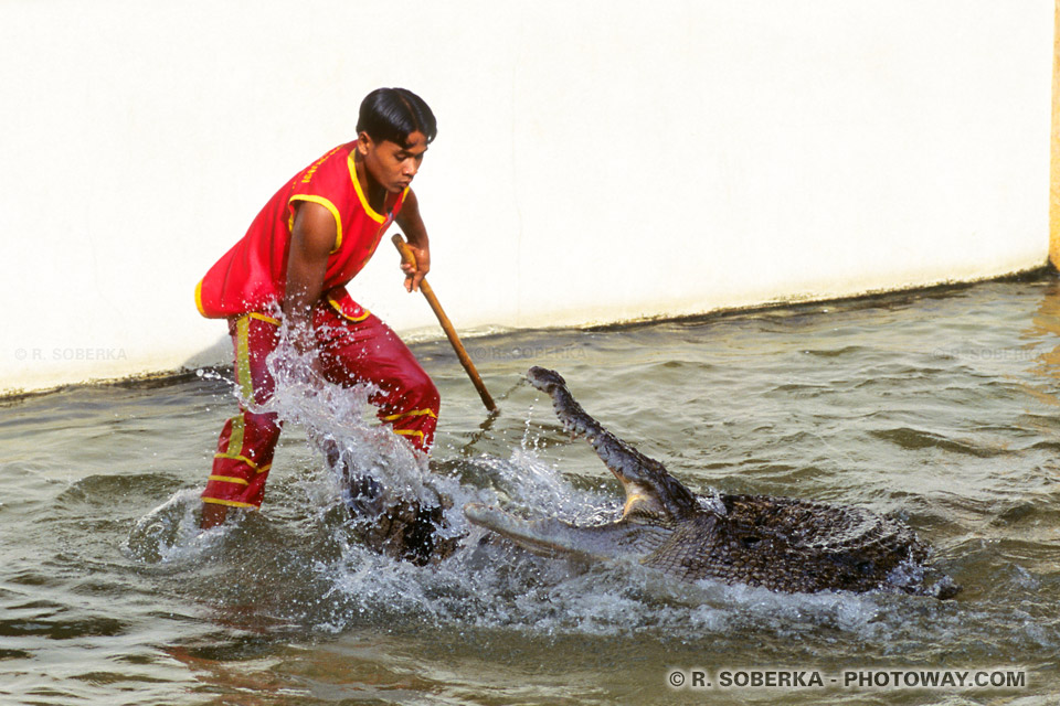 Photo d'un Jeune garcon Thaïlandais aux prises avec un crocodile !