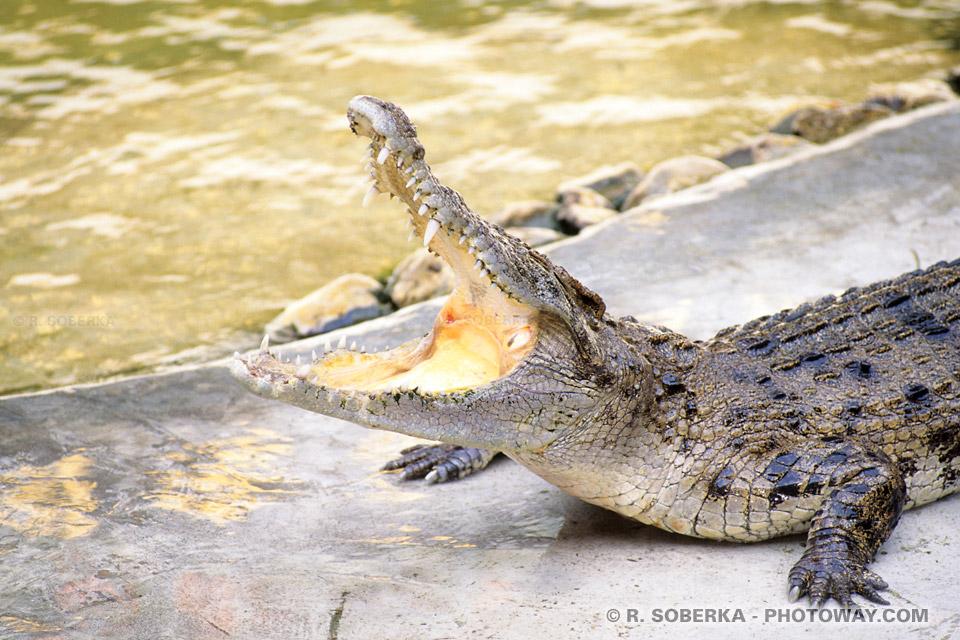 Visite de Crocodile Farm une ferme d'élevage de Crocodiles en Thaïlande