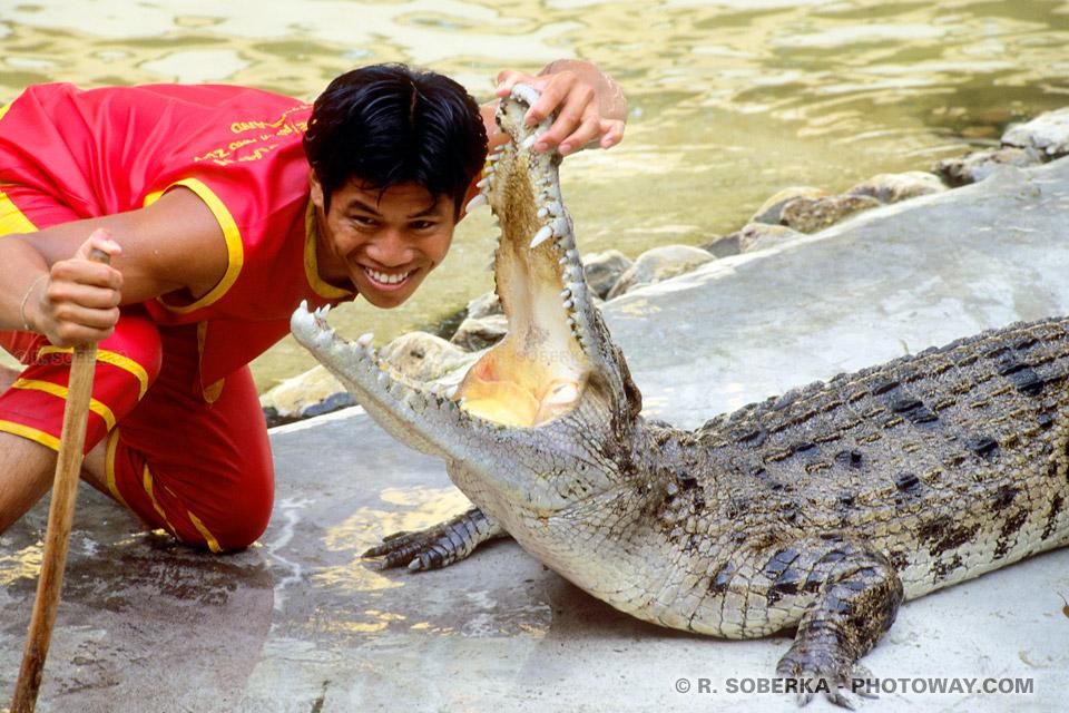 Photo de la tête dans la Gueule d'un crocodile !