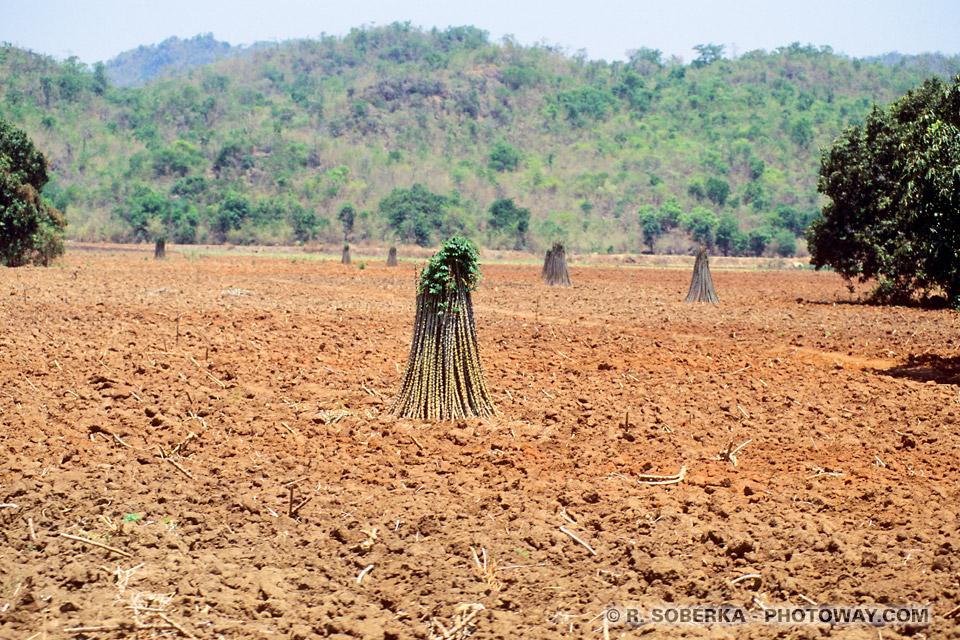 Voyages en Thaïlande - visite dans les campagnes à la période sèche