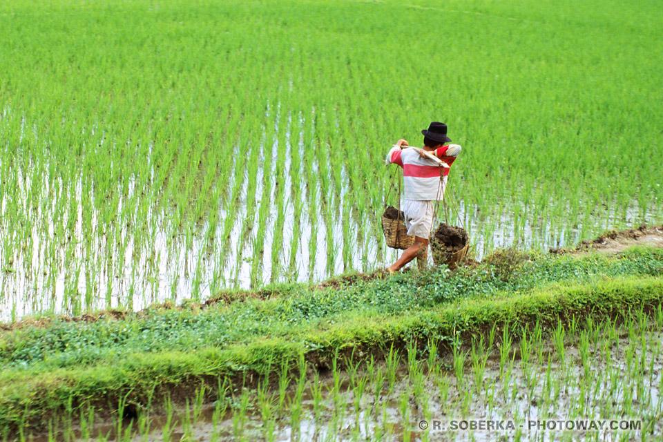 Photos des inondations des rizières en Indonésie