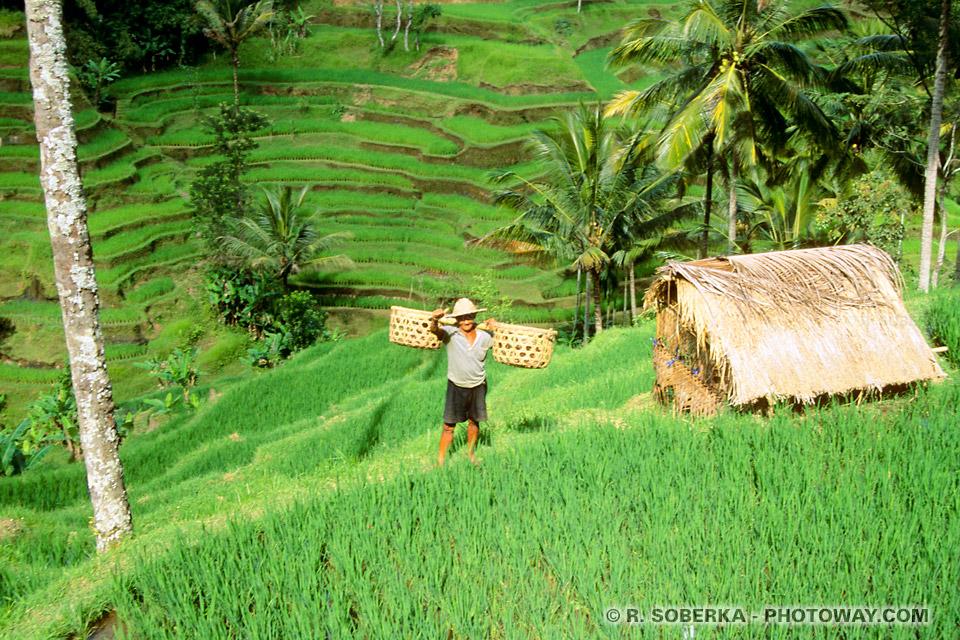 Photo d'un Balinais dans les rizières de Bali