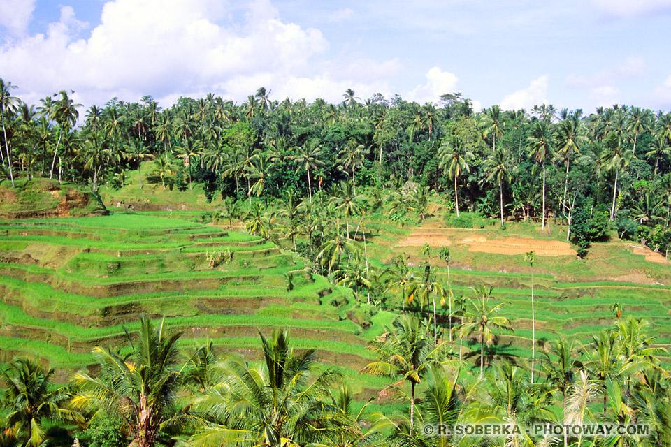 Photos rizières en terrasses à Bali en Indonésie