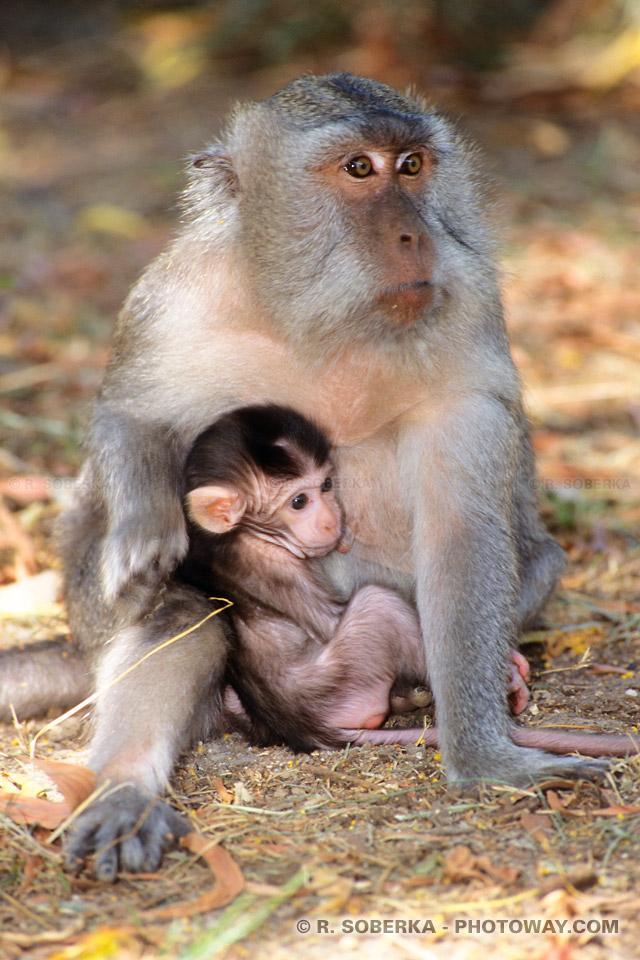 Photos de singes et infos sur les dangers et problèmes à Bali