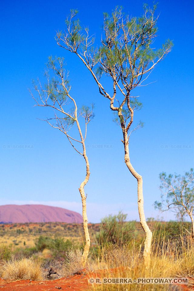 Infos sur le climat du désert en Australie