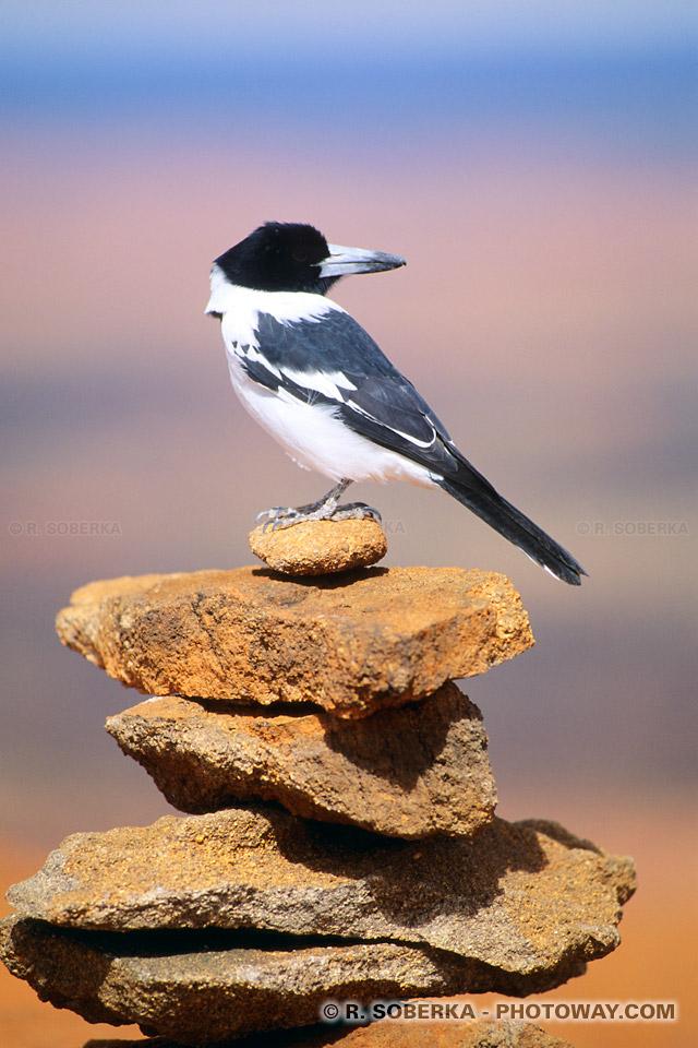 Photo d'un oiseau solitaire et reflexions d'une journée de méditation
