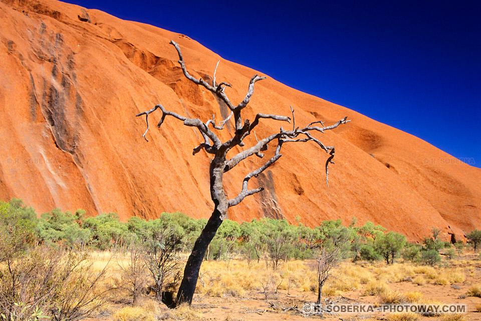La plus belle photo d'Australie ans le désert