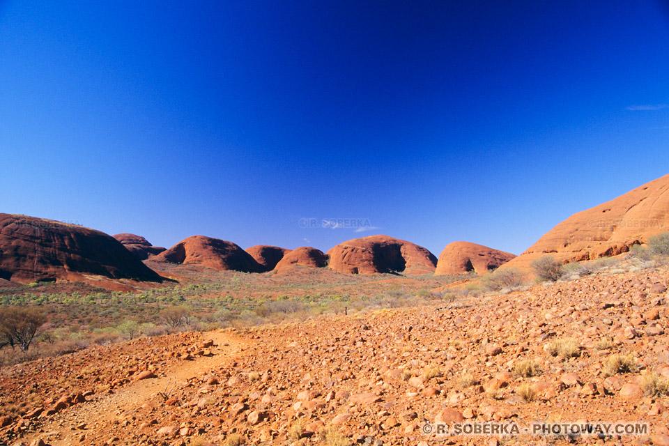 Photo de la végétation clairsemée du désert en Australie