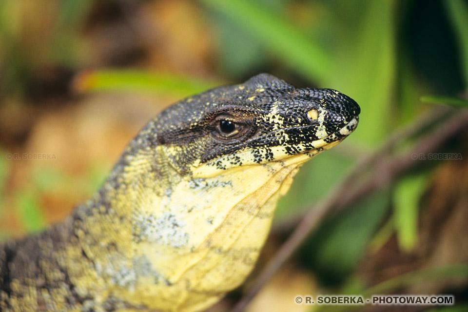 Photos de la visite du parc Naturel de noosa en Australie